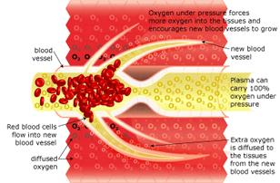 Neurovascular Regeneration